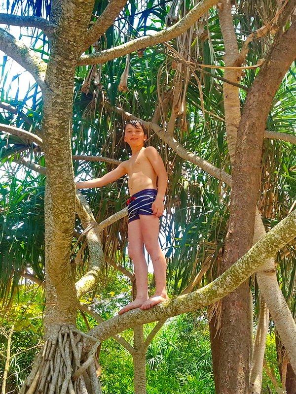Tree climbing on teh beach