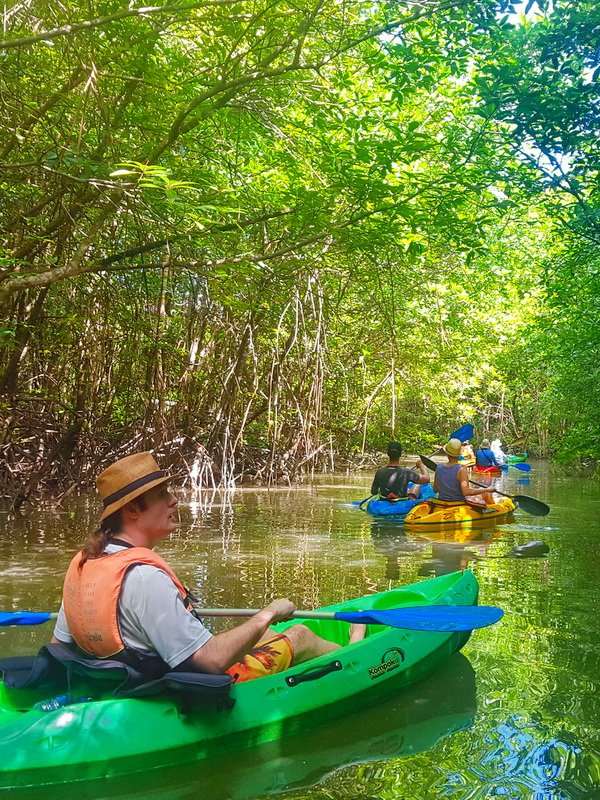 Mangrove tour kayaking