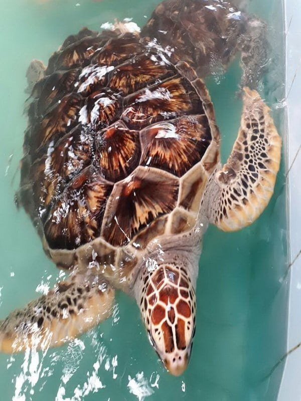 Sea Turtle Conservation Center