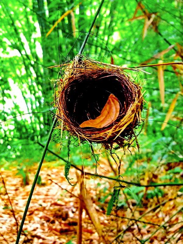 Bird nest in the Khao Lak jungle