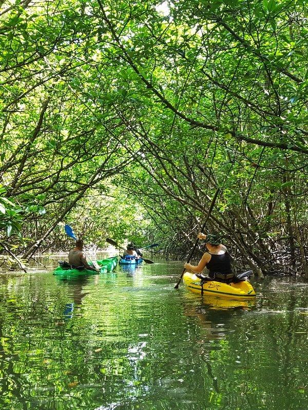 Mangrove Kayaking Tours in Khao Lak