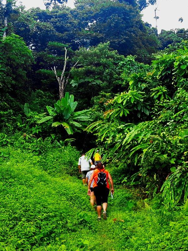 Khao Lak walk in the jungle